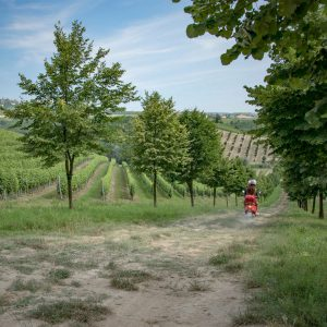 The 50 shades of nebbiolo between Langhe and Roero